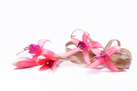 flores fucsia: Composition of fuchsia flowers with buds and a flax bow Foto de archivo