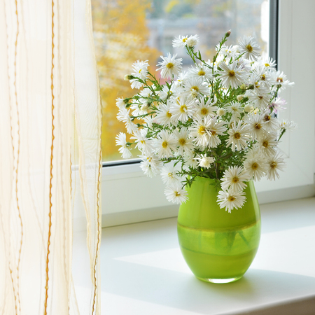 camomiles: Bouquet of white camomiles at a window autumn background