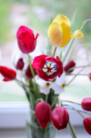 bright blured bouquet of spring red and yellow tulips at a window, springtime concept Stock Photo
