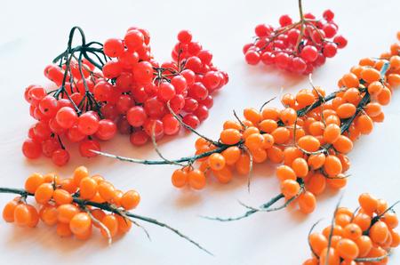 ripe viburnum and sea-buckthorn berries over white background, autumn season composition Stock Photo