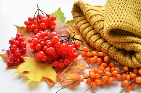 ripe red viburnum and orange sea-buckthorn berries with warm knitted clothes and various colored maple tree leaves over white background
