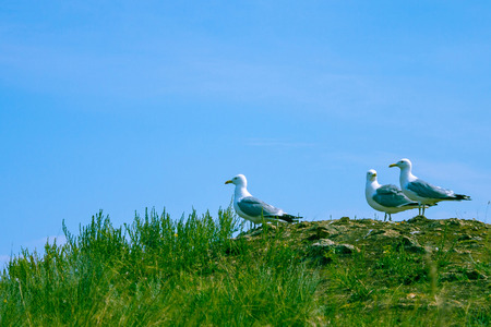 Seagulls sit on the grassy shore and look into the distance. Summer. Clear sky.