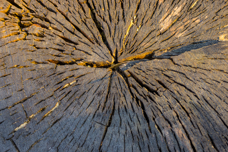 eldest: Cross-section of a tree, from the center there are natural cracks. Brown shades, evening lighting. Stock Photo