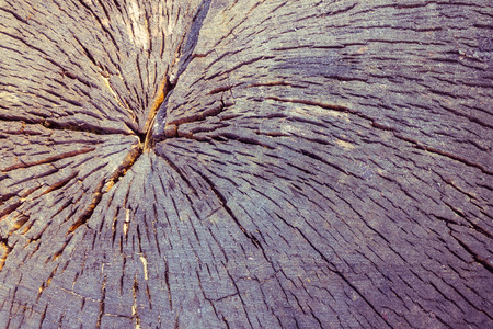 The old trunk of the sawn wood, cross-section. Natural cracks, darkened wood. Daylight, purple toning.