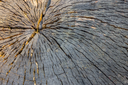The trunk of the sawn wood, the core. Darkened wood in cracks. Side lighting.