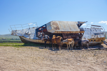 On the sandy shore, an abandoned, old, rusty ship. In his shadow the horses hide from the heat, from the midday sun. A clear summer day, in the distance the green hills and steppe. Island on Lake Baikal.