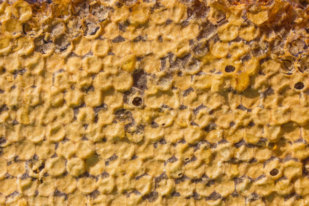 Natural texture of honeycombs. Inside is fresh honey, on top is a layer of beeswax. Warm shades, daylight. Banque d'images