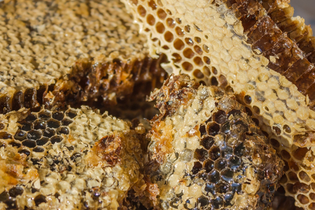 Hexahedral cells are filled with viscous flower honey, on top a thin layer of beeswax. A natural product delivered from a beehive. Banque d'images
