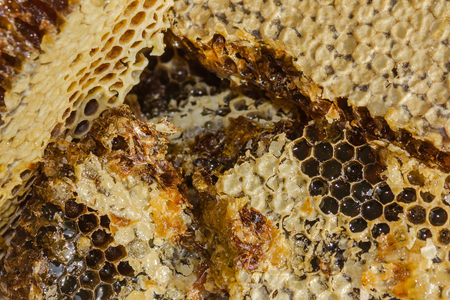Honey in honeycombs, a product produced in an apiary. A remedy for colds, coughs, raises immunity. Daylight. Banque d'images