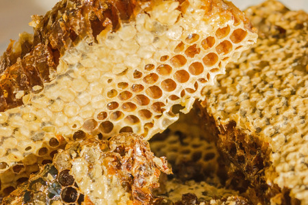 Bee honeycomb, covered with wax, inside the fresh honey. A useful product with apiaries, a remedy for colds. Macro photography.