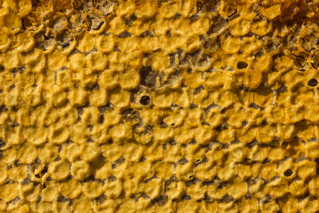 Natural honey combs with honey. Light yellow wax on top. A useful product produced in the apiary. Top view, daylight.