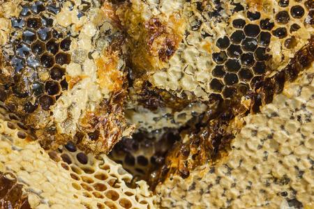 Produit naturel, nourriture saine. Le nid d'abeilles est rempli de miel et scellé avec de la cire. Vue d'en-haut.