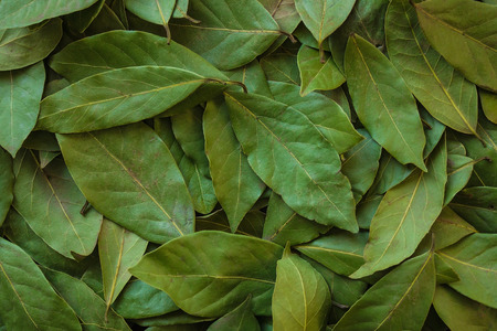 Background of long green leaves of laurel tree. Aromatic seasoning, spice, addition to hot dishes. Daylight. Stock Photo