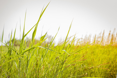 Green grass, meadow, field. Countryside, freedom, expanse. Bright sky, toning, the background is blurred.
