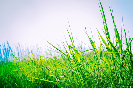 Green grass against the sky. The height of summer, July. Countryside, freedom. Toning, copy space.