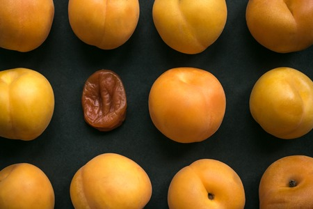 Among fresh, bright apricots, one is wrinkled, dry. Age changes, wilting, old age. Dark background, top view.