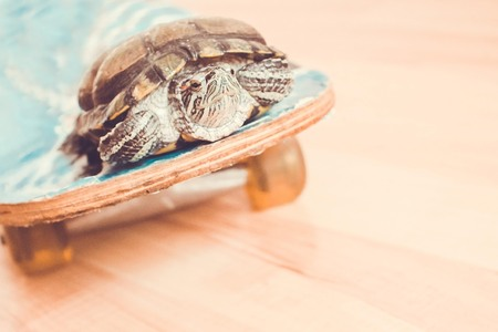Passenger transportation, movement, journey. Pretty turtle on a skateboard. Toning, copy space.