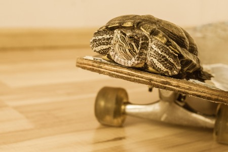 Passenger transport, fast track, comfort. Turtle on a skateboard. Muffled tones, copy space.