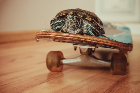 Turtle on a skateboard, speed increase, courier. Warm toning, save space.