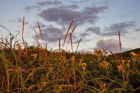 Green grass, wildflowers, ears of corn, sky and clouds. Evening, sunset lighting. Summer, nature, space.