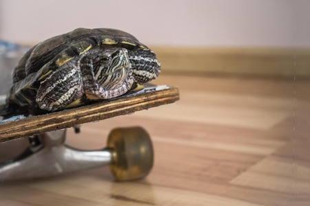Increase speed, comfortable transportation. Green turtle rides a skateboard. The background is blurred.