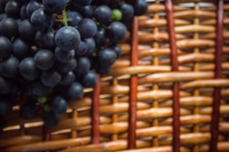 A wooden wicker basket, on top of a bunch of black grapes. Round dark blue berries. The background is blurred, vintage toning, vignetting. Copy the space. Imagens - 122434418