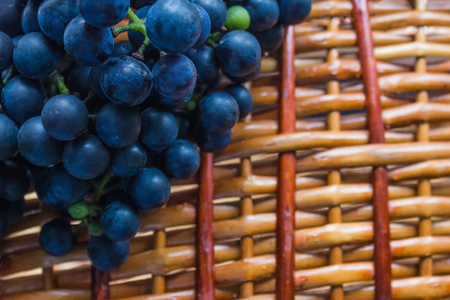 Grapes on a wicker surface. The village, farm, vineyard, homestead. Raw materials for wine production, home winery. Country style, copy space.