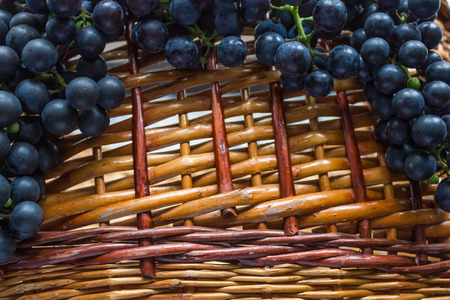 On an ancient wooden basket of clusters of dark grapes. Agriculture, viticulture, home winery. Natural colors, daylight.