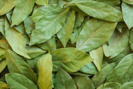Dry bay leaf, seasoning of Caucasian cuisine. A layer of dried leaves is green. Aromatic spice for soups, sauces, meat, canned vegetables. Imagens
