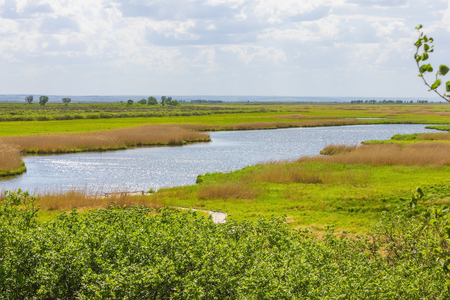 Lake, rural landscape, nature on a summer day. Bright, rich colors, midsummer. In the distance the horizon line.