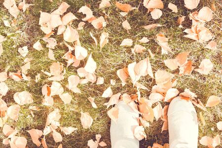 Fallen leaves on the ground. Autumn, change of season. Top view, lateral solar exposure. Vintage toning, muted tones.