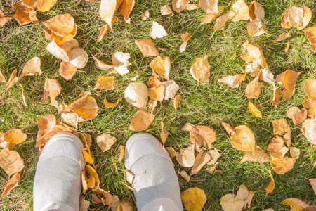 Yellow fallen leaves on green grass. On the side of the foot in light boots. View from above. Lateral solar lighting.
