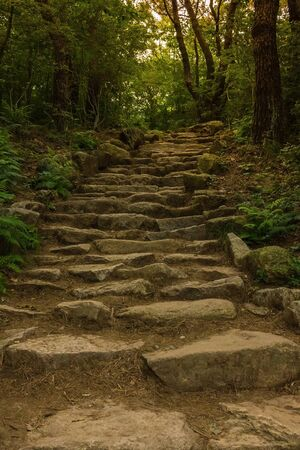 Stone steps go up. Old road in the forest. Rough, untreated rock. Around the green trees. Vertical layout.