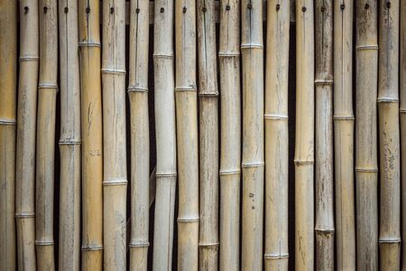 Dry bamboo, wall, fence. Natural texture, brown, yellow tones. Asian style. Vignetting.