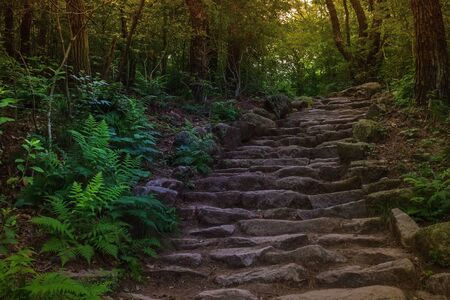 Ancient road in the forest. Rough steps made of natural stone. Around the green trees.