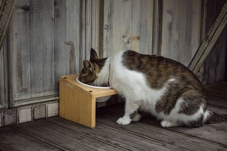 Domestic cat, pet, eating from a bowl on a wooden porch. Background of gray boards. View from the back, vignetting. 版權商用圖片