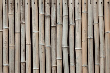 Dry bamboo stems, wall, surface. Natural texture. Vertical stripes. Muted tones. 版權商用圖片