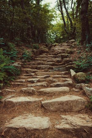 Huge stone steps go up. The hard way to the goal. Around the forest, green trees. Vintage toning.