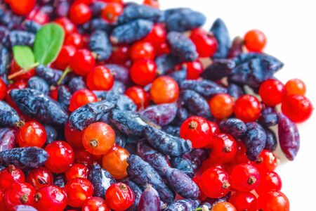 Juicy, shiny berry, bright colors. Honeysuckle and redcurrant, mix. The height of summer. The distant plan is blurred.