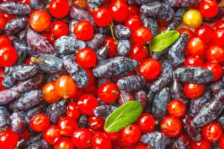 Bright, shiny berries, currants and honeysuckle. Juicy taste, freshness. View from above. Фото со стока