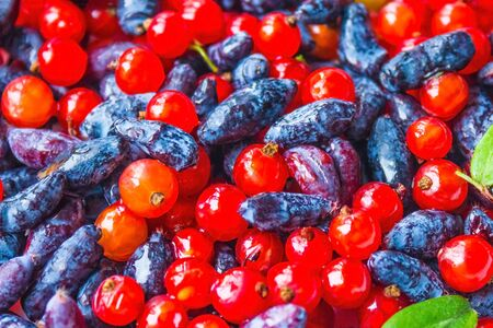 Red and blue wild berry, mix. Currant and honeysuckle. The height of summer, bright colors, rich taste.