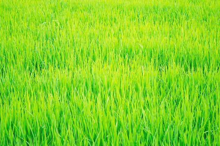 Hierba verde brillante, color intenso. Juventud, frescura, jugosidad. Iluminación solar, tintado.