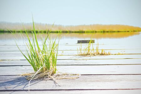 Wooden boards, pier near the lake. Countryside, summer day. In the foreground is green grass. Bright sunshine. Silence, serenity. Banco de Imagens