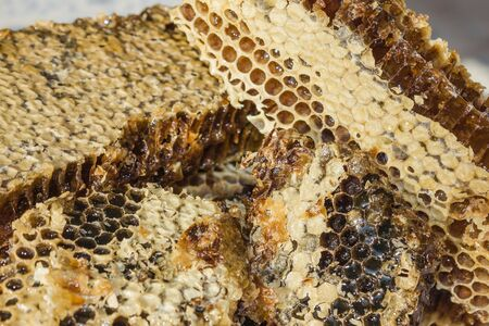 Useful, natural product with apiaries, yellow honey in honeycombs. A remedy for colds, raises immunity. Hexahedral cells are filled with honey.