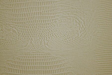 Python skin, a pattern of small cells of different sizes. Light, golden shades, matte surface. Daylight.