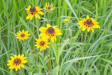 Summer field, meadow, rustic background. Bright green grass, freshness. Warm season, country vacation. Foto de archivo
