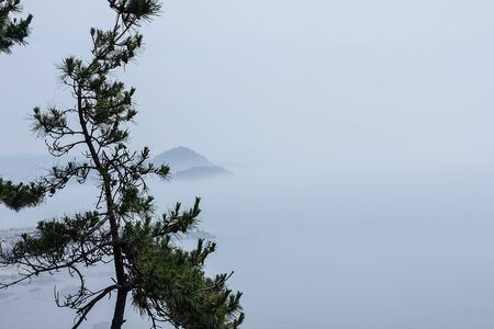 Traditional Korean, Japanese seascape. Everything is in dense fog. In the foreground is a conifer, pine. Away the hills. Copy  space. Foto de archivo