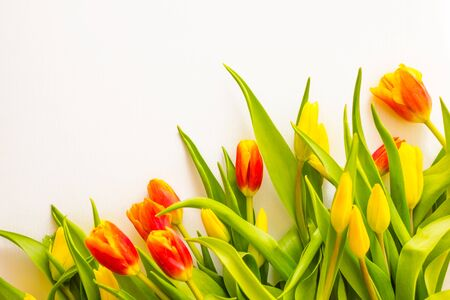 Yellow and red buds, green leaves. Holiday greetings, gift. Light background, copy space.