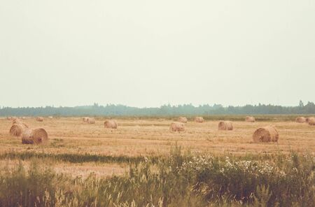 Mowed field, meadow. Twisted bales of hay. Far away is a green forest. Summer, suffering, farm work. Toning.