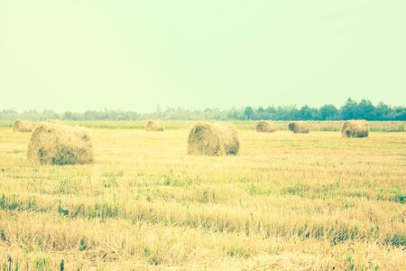 Mowed hay, dry grass on a large field. Farm, care on earth, agriculture. Summer day, July, August.